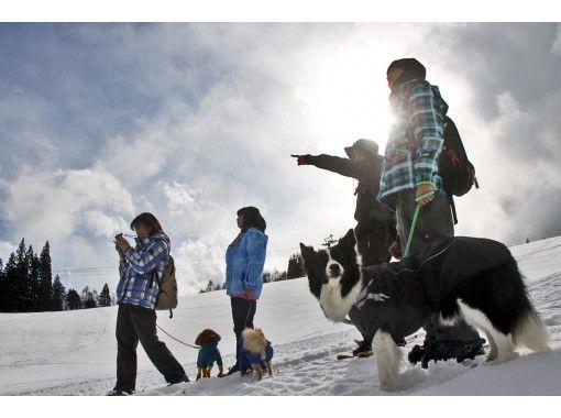 【長野・白馬】初心者向けの白銀スノーシューツアー(ホットドリンク付き)愛犬連れもOK