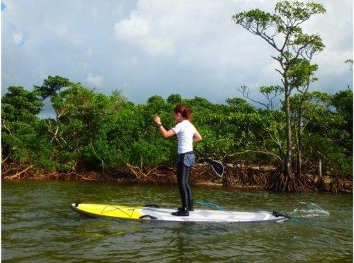 [Okinawa Ishigaki island] exploring the mangrove sap! Stroll through the rich nature of mangroves, flora and fauna!の紹介画像