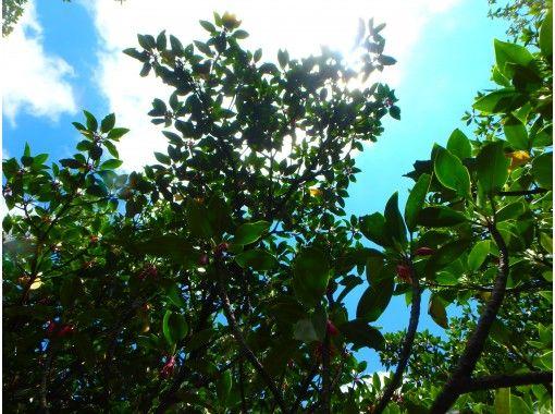 [Okinawa Ishigaki island] Kayak exploration of mangroves ☆ 1 hour casual course!の紹介画像