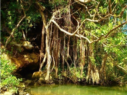 [Regional common coupons available / New corona measures] Same-day reservations are OK! A mangrove kayak tour on the Hija River, which grows like a jungle! Free photo / video giftの紹介画像