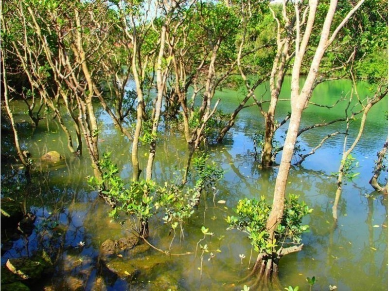 Reservation on the day OK! 【Okinawa / Kadena】 Mangrove kayak tour at the Yeegu River growing like a jungle! Introduction image of