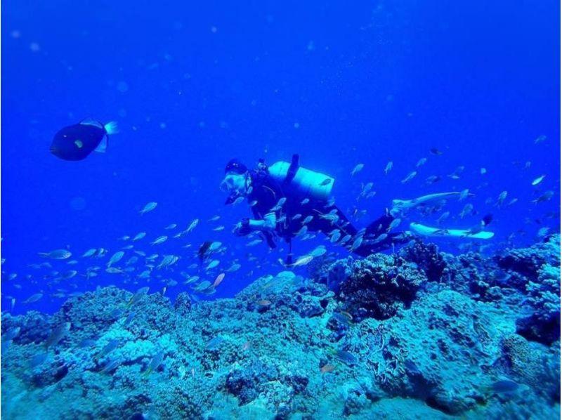 【沖縄/沖縄市(コザ)・北谷・宜野湾】短時間で挑戦できる! 大サンゴ礁ビーチで体験ダイビングの紹介画像