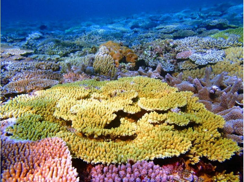 【沖縄・本部町】秘境の地サンゴ畑へ!!Cコースの紹介画像