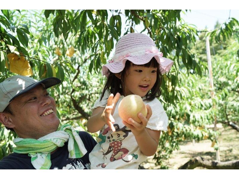 【岡山・赤磐市】岡山県最大級の桃園で名産の白桃を堪能(ひえひえ桃食べ放題コース)の紹介画像