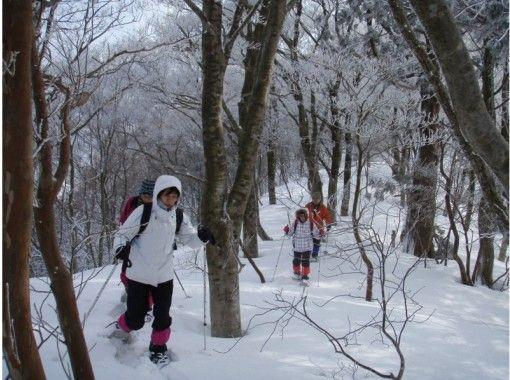 [京都·Sugo]從6歲開始!関西的祕境!第一次在Mibu no Mori雪上徒步雪山步行(含午餐)の紹介画像