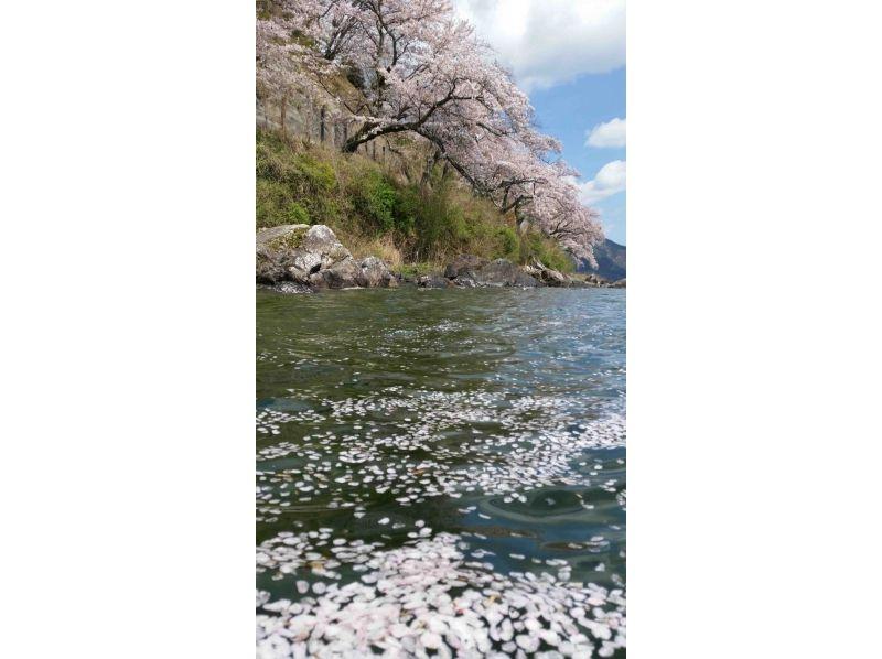 【滋賀・琵琶湖】湖岸沿いのソメイヨシノを眺める♪カヤック de お花見ツアーの紹介画像