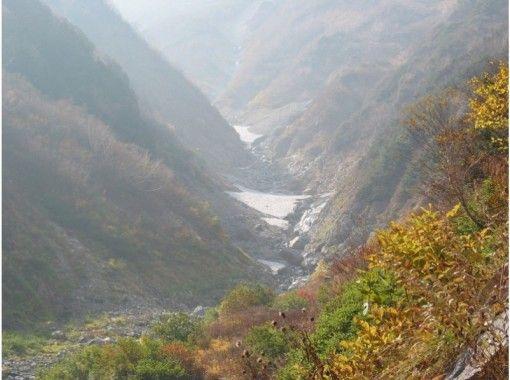 【長野・大町市】日本三大雪渓の一つ「針ノ木雪渓」を目指す「針ノ木自然遊歩道コース」~高山植物花三昧