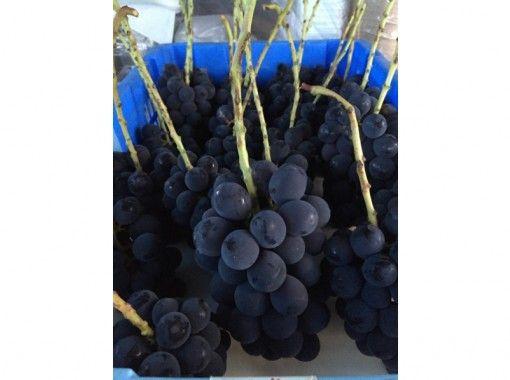[山梨縣韭崎]桃,葡萄與葡萄酒種植經驗☆紀念品!の紹介画像