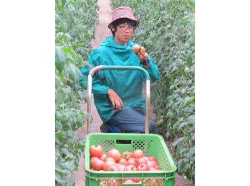 【Fukushima / Ninomatsu City】 Summer connected with nature! Harvesting vegetables (experience)の紹介画像