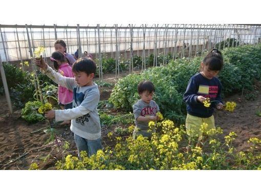 【千葉・野田市】うちの畑で旬の野菜収穫体験(季節により野菜が変わります)