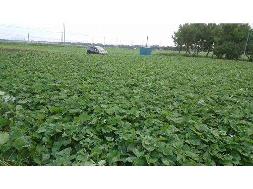 【千葉・野田市】みんなDE収穫&羽釜DEお昼ごはん!こだわりの旬野菜を味わおう!
