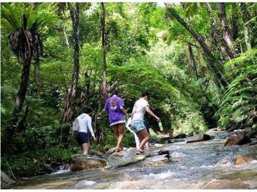 【沖縄北部・国頭村】やんばるおもしろ!リバートレッキング|やんばる国立公園に指定された沖縄本島