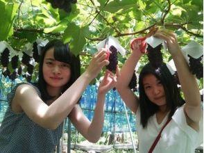 漆山果樹園の画像