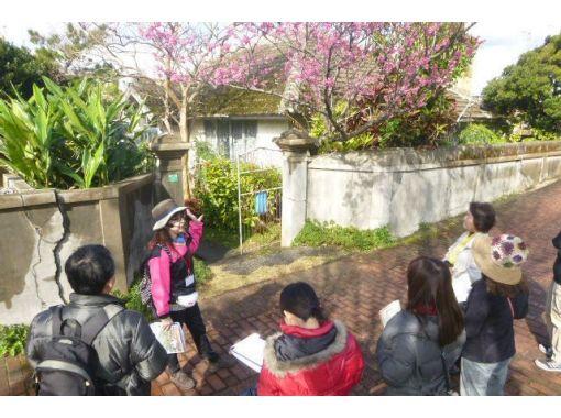 【沖縄・名護】観光ガイドツアー 「ひんぷんガジュマル」パワースポットめぐりコース