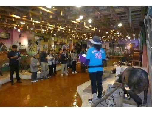 【沖縄・名護】観光ガイドツアー 「やんばるの生活と自然」名護博物館コース