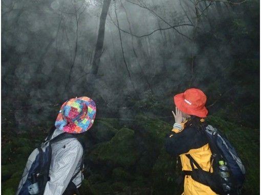 【鹿児島・屋久島】地域共通クーポン利用O.K!幻想的な苔むす森へ!少人数制ガイド付き白谷雲水峡半日ツアー(苔むす森までの往復)の紹介画像