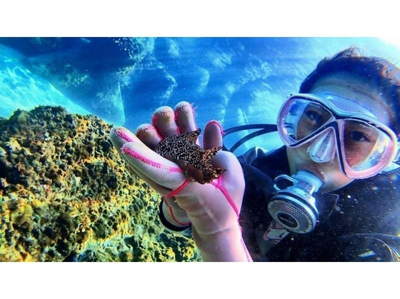 Hayama diving service recommended