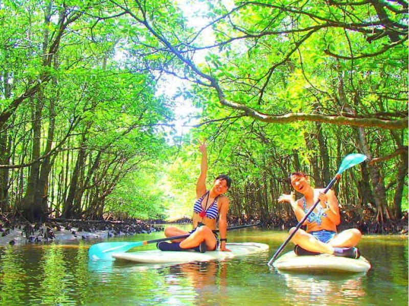 【Okinawa · Iriomote Island】 Mangrove SUP & Introduction picture of the fall of the falls and the snorkel of Baras Island