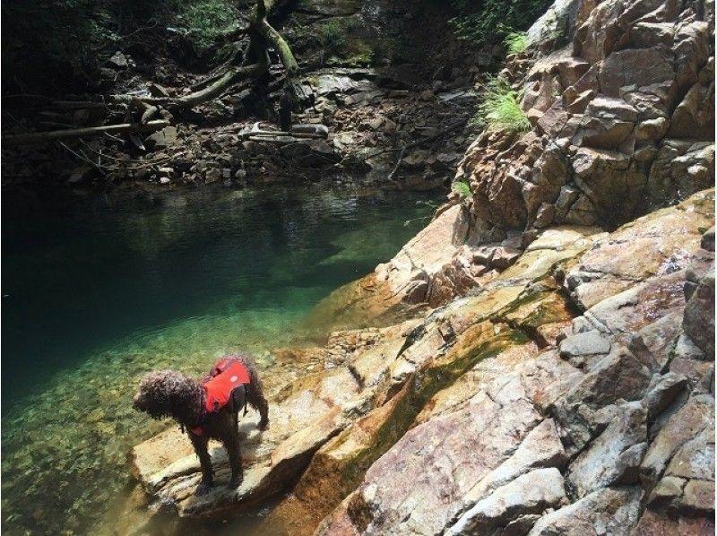 【那須エリア】②午後の部 River Walking~那珂川の支流で川遊び~の紹介画像
