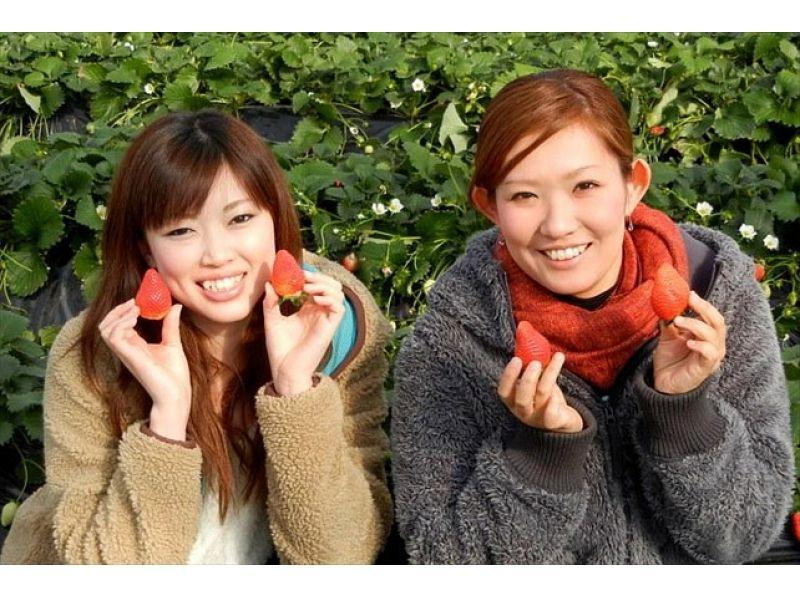 【群馬・沼田】12月から6月まで楽しめる!イチゴ狩り♪の紹介画像