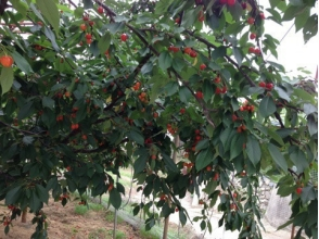 宿沢フルーツ農園の画像
