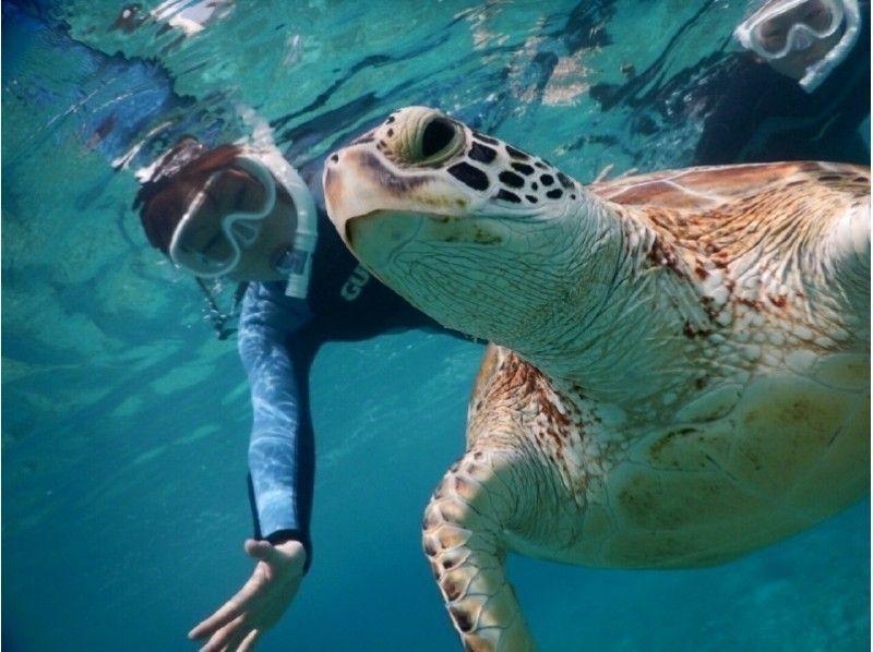 【Okinawa · Miyakojima】 ☆ Encountering rate 100% ☆ Introduction image of the photo tour swimming with sea turtle