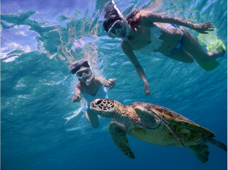 【Okinawa · Miyakojima】 ★ Encounter Rate 100% ★ Tortoise and Coral Which also introduces the photo tour