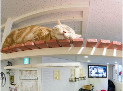 【埼玉・川越】ネットしたり。コミックを読んだり。猫さんとふれあう〔180分コース〕