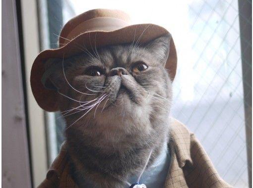 【埼玉・大宮】広い空間でゆったりのんびり。猫さんとふれあうネットカフェ(60分コース)大宮駅より徒歩5分!