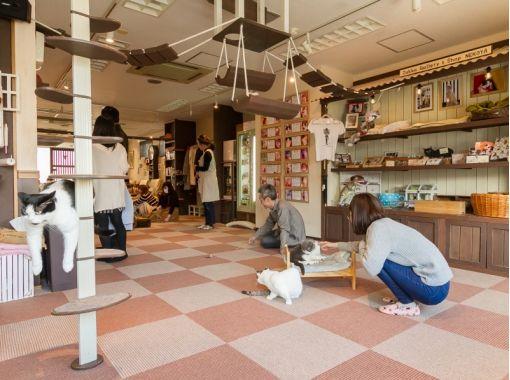 【埼玉・大宮】広い空間でゆったりのんびり。猫さんとふれあう〔60分コース〕