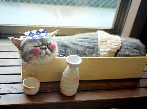 【埼玉・大宮】広い空間でゆったりのんびり。猫さんとふれあうネットカフェ(180分コース)大宮駅より徒歩5分!
