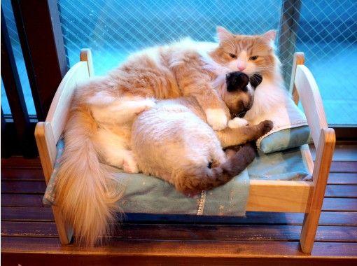 【埼玉・大宮】広い空間でゆったりのんびり。猫さんとふれあうネットカフェ(時間無制限コース)大宮駅より徒歩5分!
