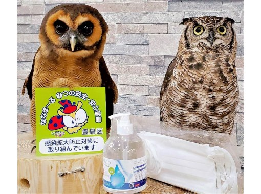 [Tokyo / Ikebukuro Animal Contact Experience] Experience the contact with Tokyo Owl Cafe & Hedgehog at the same time! (Saturdays, Sundays, and holidays course: 90 minutes) 3 minutes walk from the west exit of Ikebukuro station!の紹介画像
