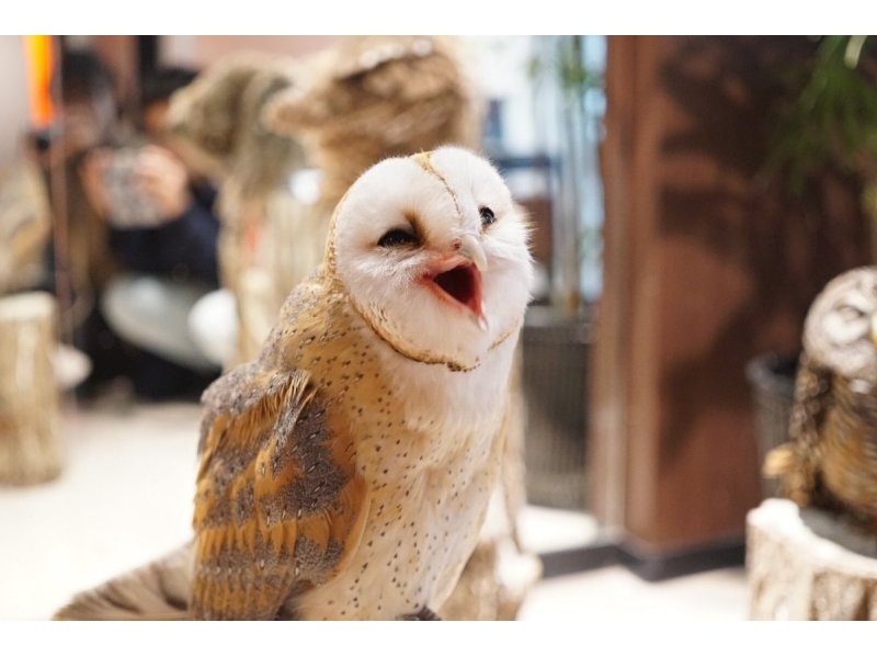 【Tokyo · Asakusa】 Introducing the 1 hour plans introduction image with the cute owl owl