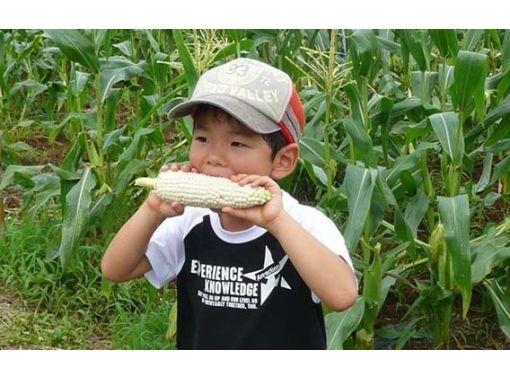 【静岡県・裾野市】とっても甘いスーパーホワイトコーンの収穫体験(4本)ファミリーで楽しもう!約30分