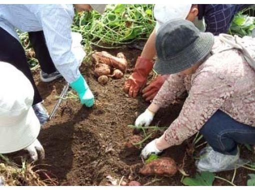 【静岡県・裾野市】富士山ガーデンファームで作るとっても甘くて美味しい安納芋の収穫体験 ファミリー歓迎