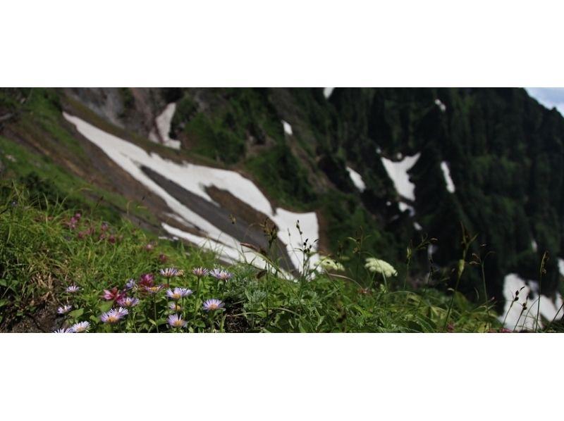 【北海道・利尻島】利尻自然ガイドサービス・利尻山縦走(鴛泊コース~沓形コース・上級者向け)プランの紹介画像