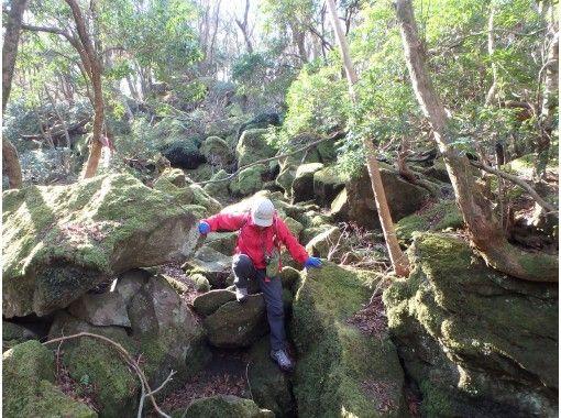 【静岡・伊豆】子供に大人気!女性ガイドと体験登山・矢筈山(やはずやま)トレッキング
