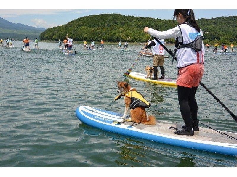 6/25 Lake Yamanaka SUPer marathon 2 km · Together with the dog! Doggie tandem class / Introduction image of freedom