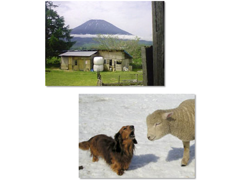 【北海道・ニセコ】羊蹄山のふもとでのんびりチクチク「羊毛フェルトコースター作り」体験プランの紹介画像