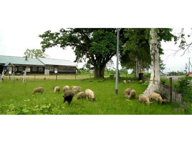 【北海道・ニセコ】羊蹄山のふもとでのんびり「羊毛手紡ぎ」体験プランの紹介画像