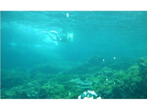 【鹿児島・種子島】シュノーケリングツアー(半日コース)エメラルドグリーンの海を満喫!!