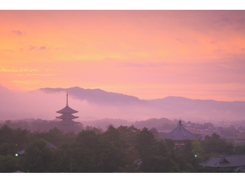【奈良・伝統文化体験】「興福寺」僧侶の法話と瑜伽行体験の紹介画像