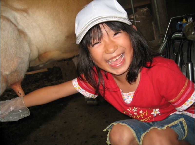 【北海道・美瑛町】牛乳の試飲できます★ジャージー牛の乳搾り体験(30分)の紹介画像