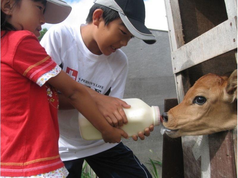 【北海道・美瑛町】仔牛のミルクやり(15分)哺乳ビン1本分★の紹介画像