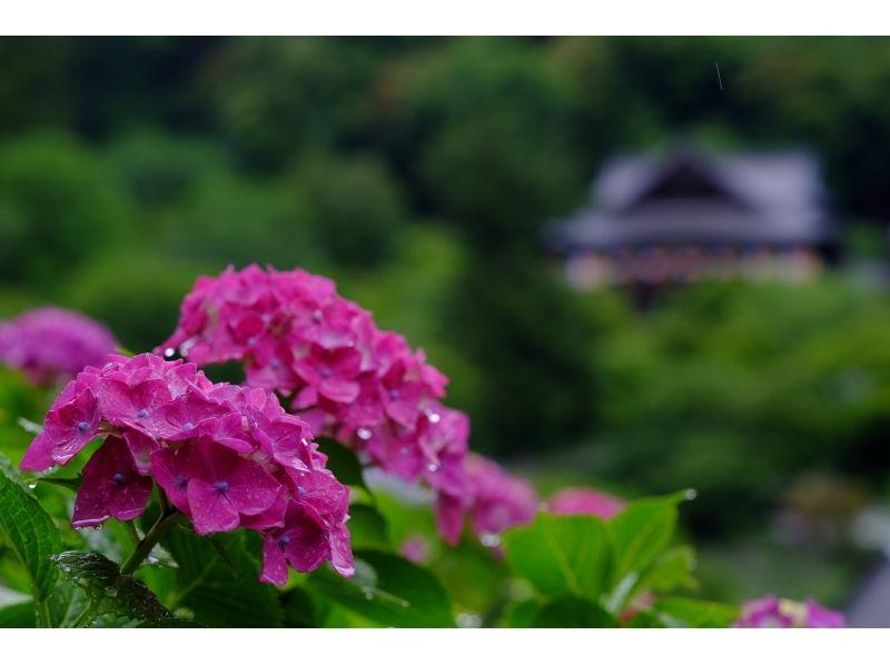 【奈良・伝統文化体験】「長谷寺」 本尊大観音尊像 特別拝観の紹介画像