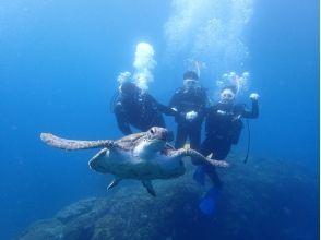 Image of Regulus diving