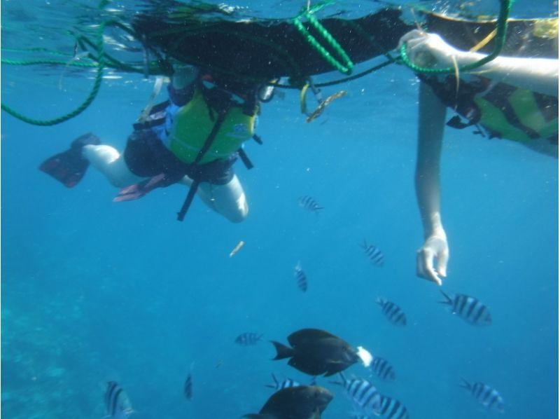 三的Noshima&藍色浮潛及傘SET和海洋2計劃洞穴