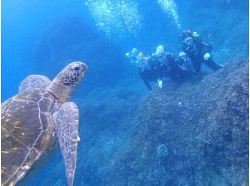[Izu Islands ・ Hachijojima】 Experience in Hachijojima, an island where you can meet sea turtles Diving Have fun! Lovely holiday, weekends and holidays planの紹介画像