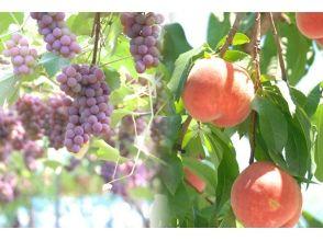 仲野観光果樹園の画像